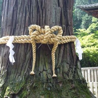 The sacred straw role for the sacred tree.