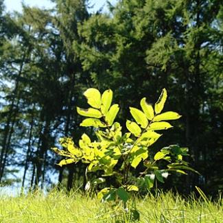「実生」(みしょう)・・・種から芽生えた苗、 なんてカワイイ名前