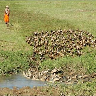 Duck & Boy